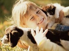 N-VA Meulebeke wil inzetten op dierenwelzijn