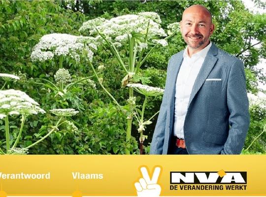 N-VA blijft aandacht vragen voor bestrijding reuzenberenklauw in West-Vlaanderen