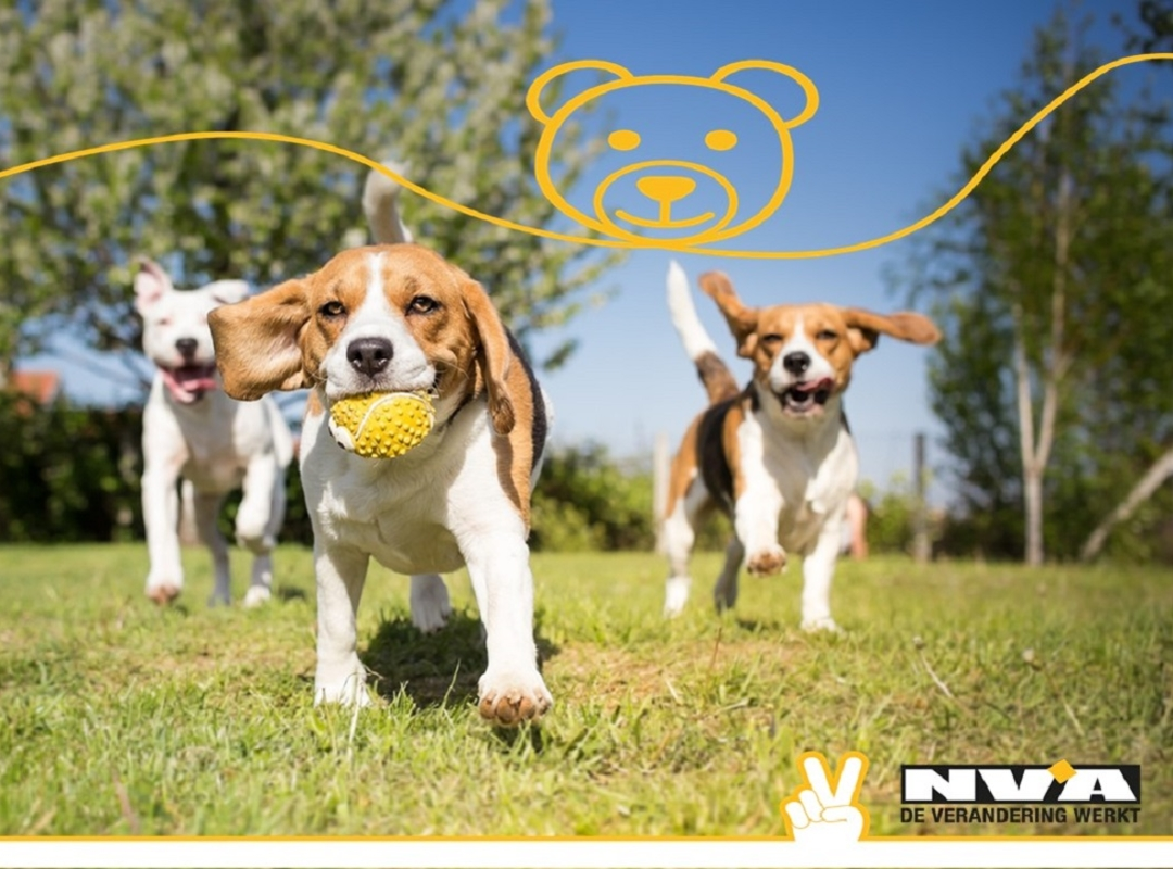 N-VA Meulebeke vraagt om hondenweide