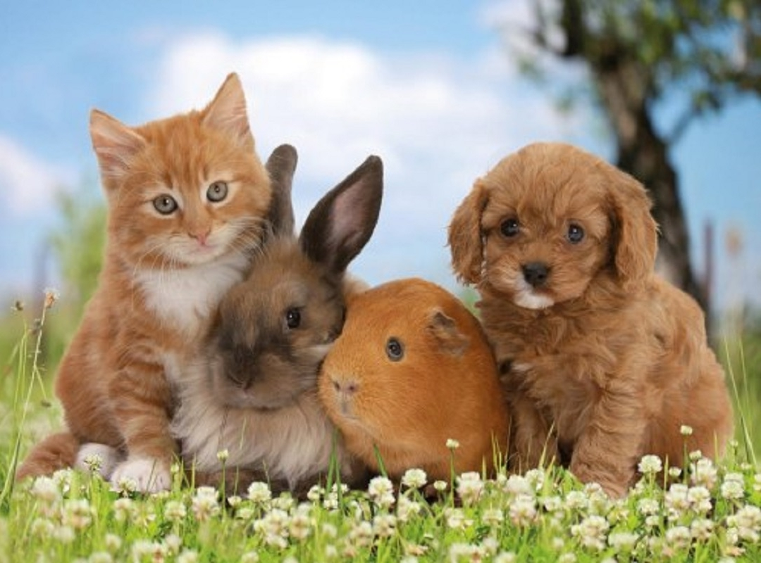 N-Va Meulebeke en werelddierendag